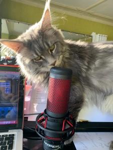 Anja's Katze beschnuppert das Mikro